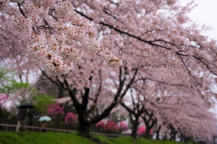 bee-綾南公園1072-2