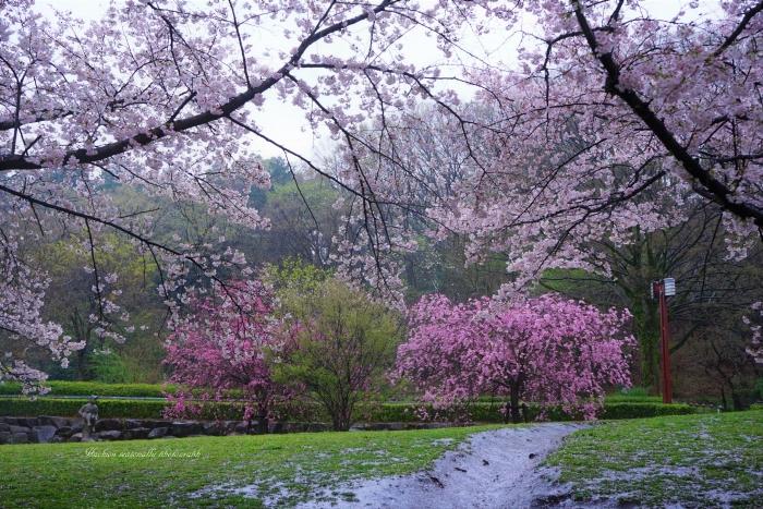 bee-片倉城跡1142