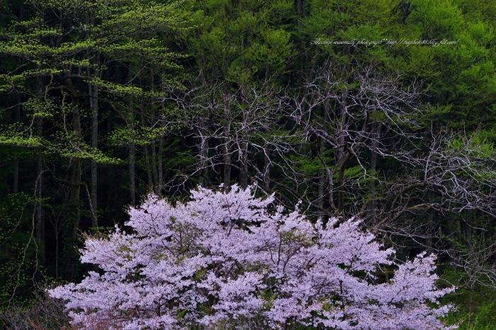 bee-裏高尾1381-3