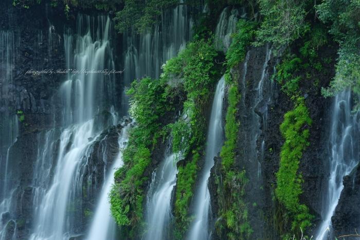 bee-白糸の滝2270