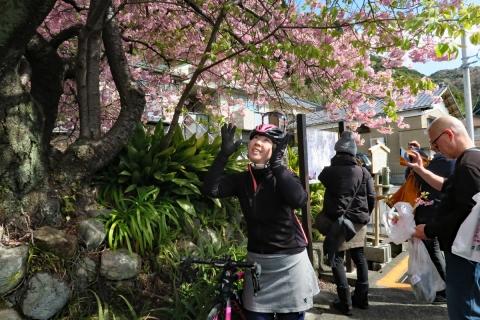 09河津桜原木