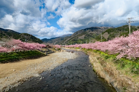 12河津桜ビューポイント