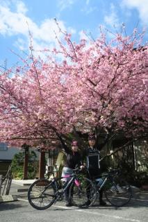 21河津桜
