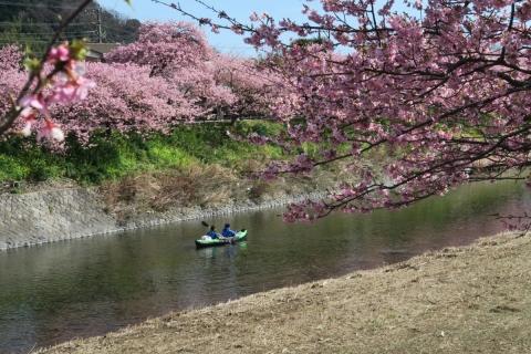 22河津桜