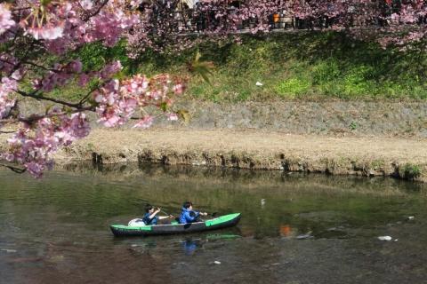 23河津桜