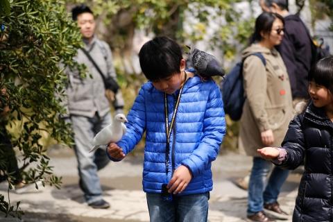 09少年と鳩