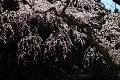17久遠寺