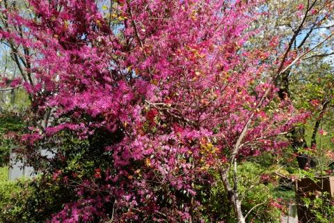 07武蔵野公園