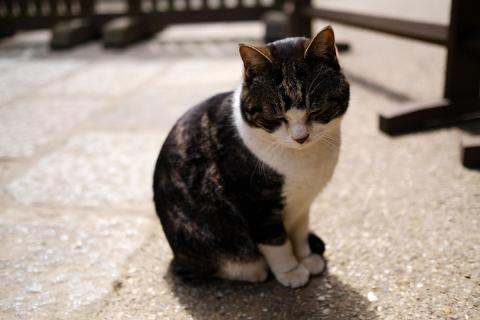 02円覚寺のネコ