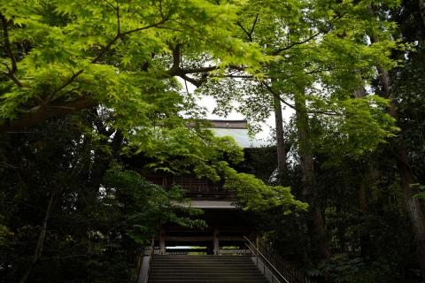 03円覚寺山門のモミジ