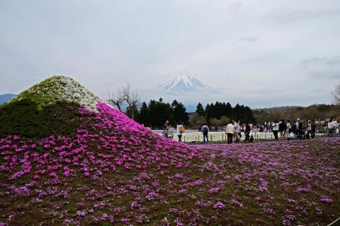 38芝桜祭り