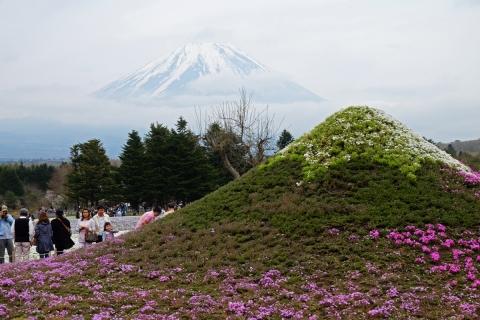 39芝桜祭り