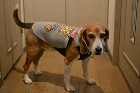 20170221犬服8611