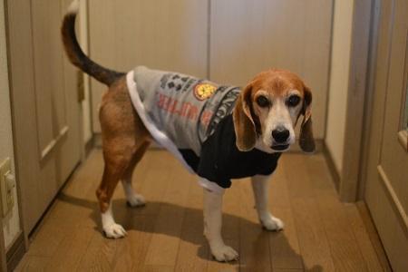 20170221犬服8530