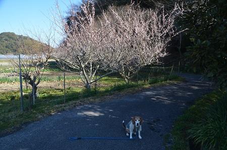 20170309犬掛古戦城跡&里見氏の墓03
