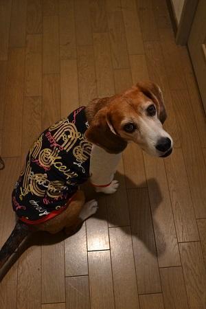 20170328犬服9434