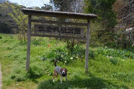 20170412佐倉城址公園06