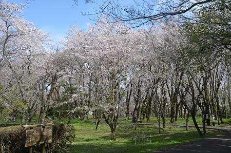 20170412佐倉城址公園31