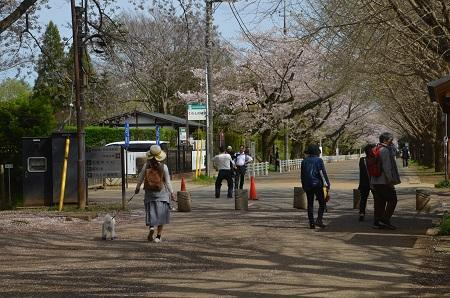 20170412佐倉城址公園41