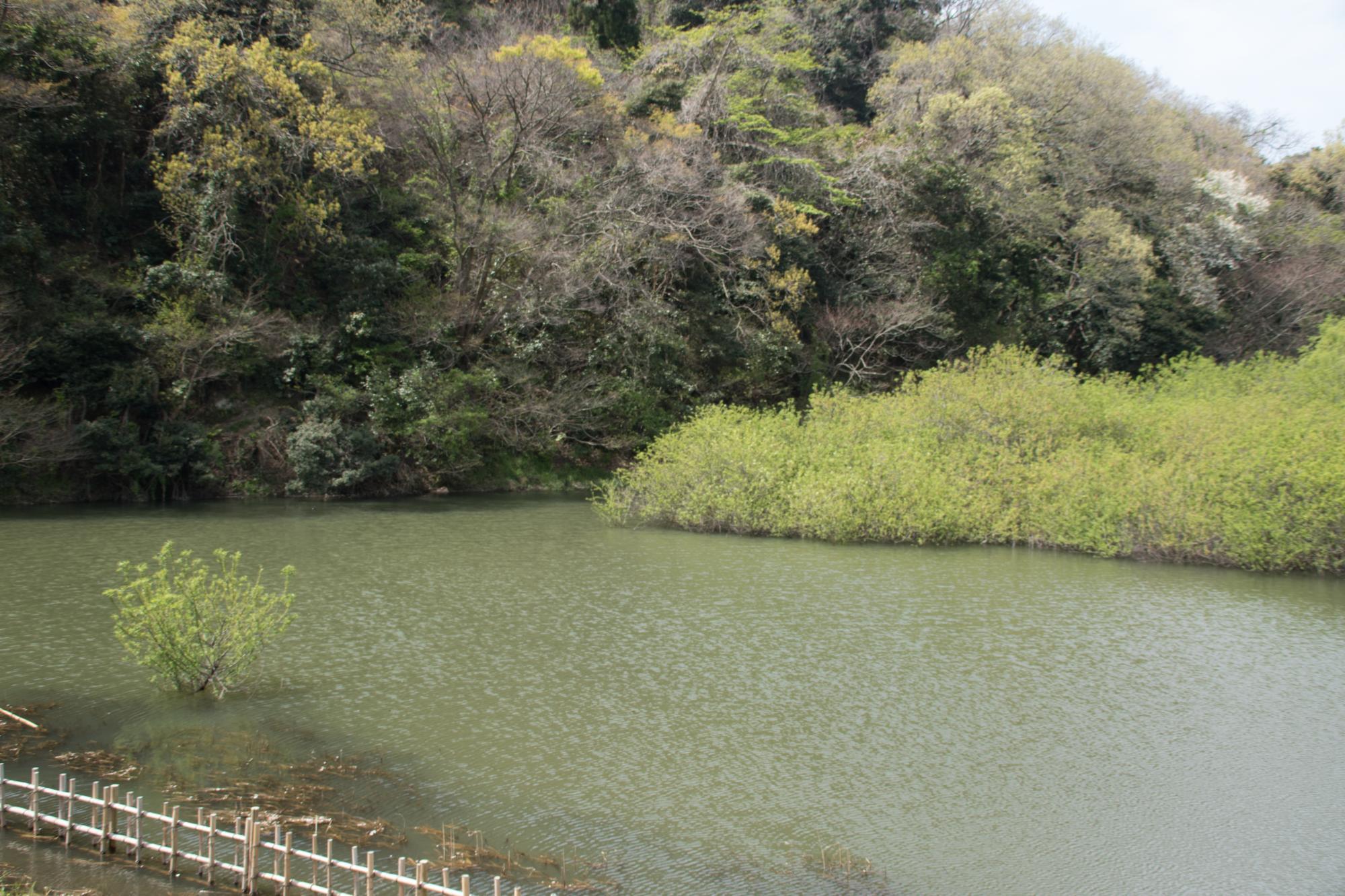 20170416-沢山池