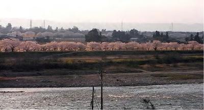 千本桜ー1