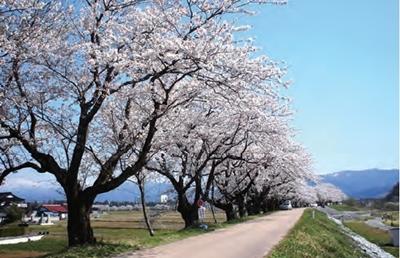 千本桜ー2
