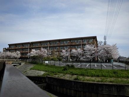 10 17.4.10 鴨川桜散歩と青柳個展 (107)