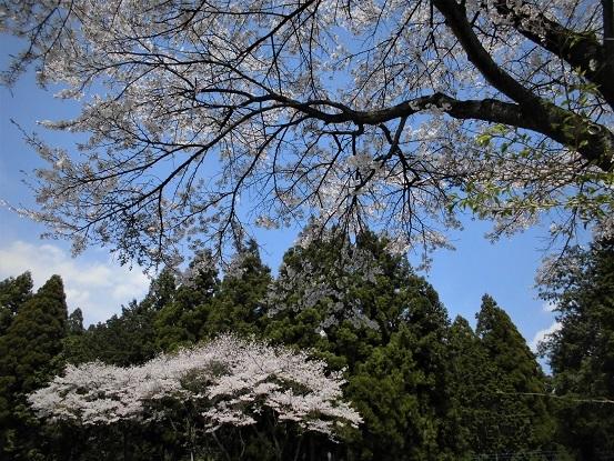 17.4.16 古賀志山→古峰ヶ原   (56)