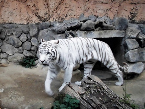 17.5.3 東武動物公園  (115)