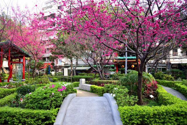 八重桜とメジロ(8)