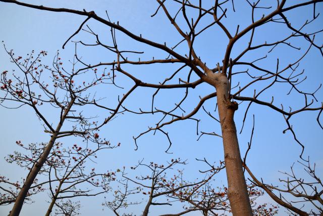 木綿の木(5)