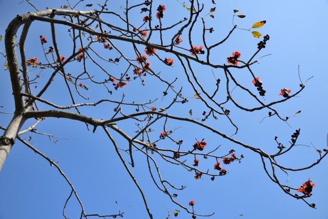 木綿の木(2)