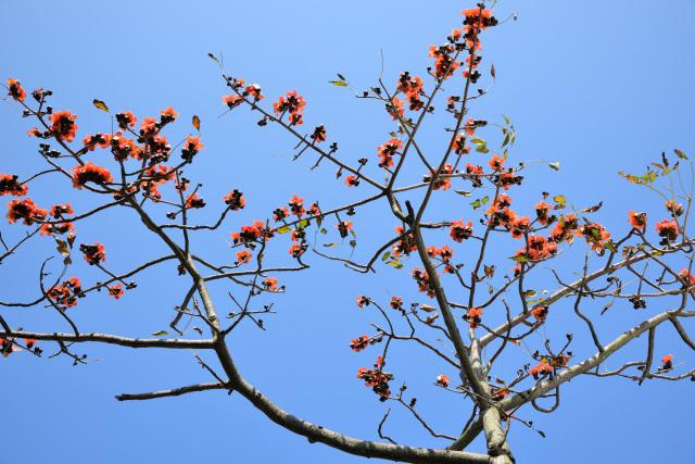 木綿の木(1)