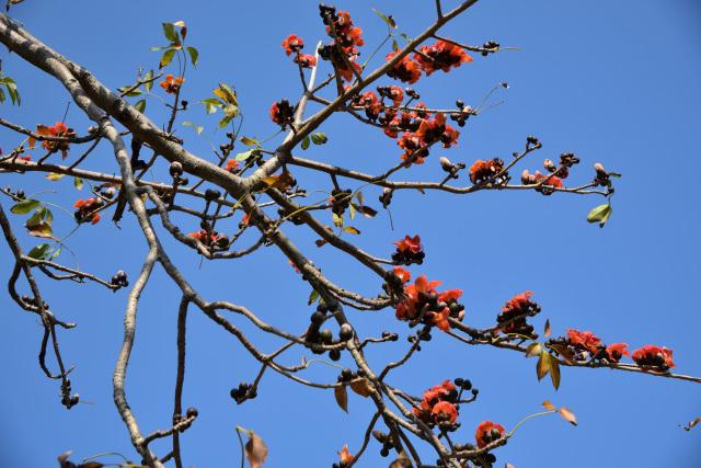 キワタの木と野鳥(1)