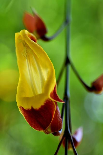 エキゾチックな花々(3)
