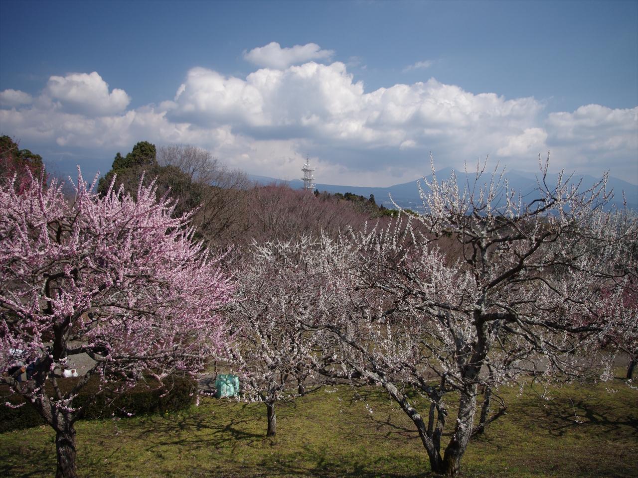 岩本山公園_IMGP1426_R