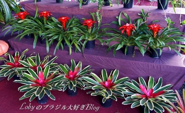 2-aki-03b.jpg