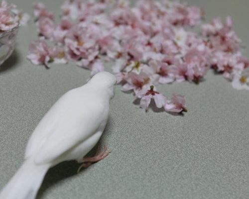 uti sakura (3)