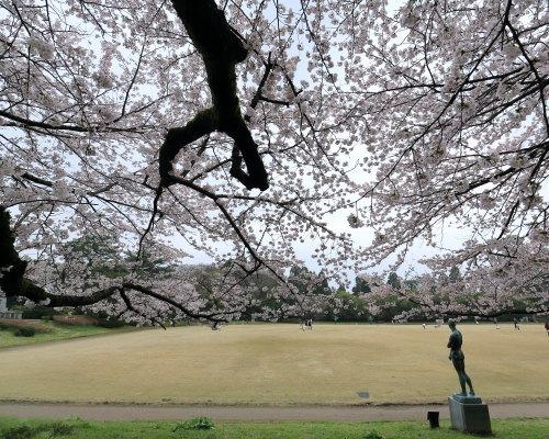 kojou sakura (7)