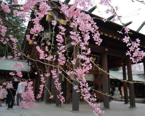 kojou sakura (6)