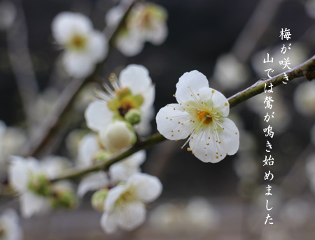 Photo20170224.jpg