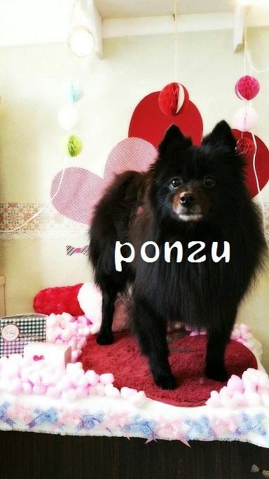 ponzu 竹田