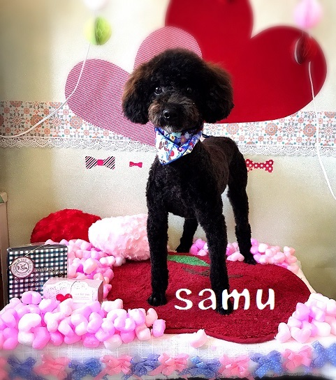 samu 徳永