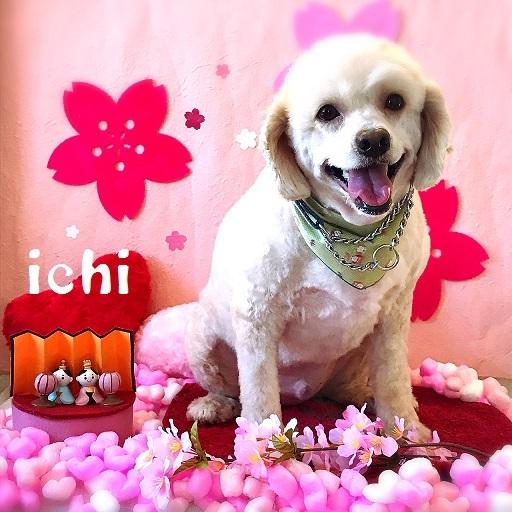 ichi 藤井