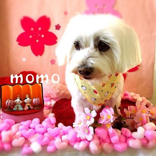 momo 長瀬