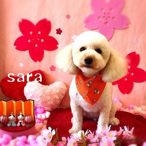 sara 赤澤