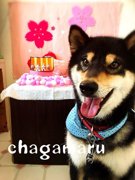 chagamaru 山崎