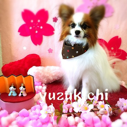 yuzukichi 金井