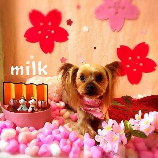 milk 島田