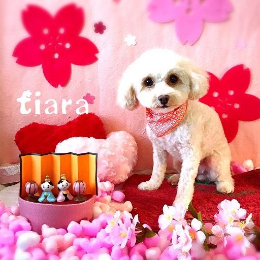 tiara 田中